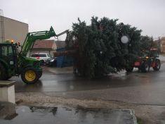 Vianočný stromček pred OcÚ 2015